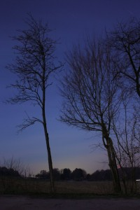Baum vor Nachthimmel