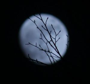 Mond und Zweige