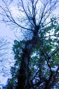 04_Baum